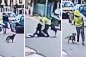 brave dog stops woman being robbed