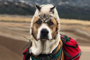 cat and dog travel world