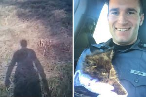 cop saves kitten