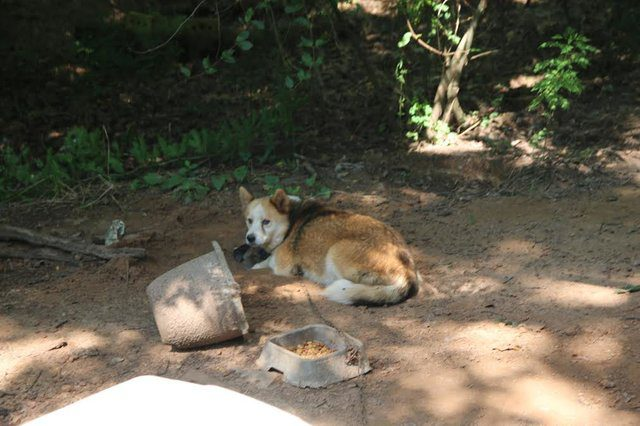 dog protects puppies living outside