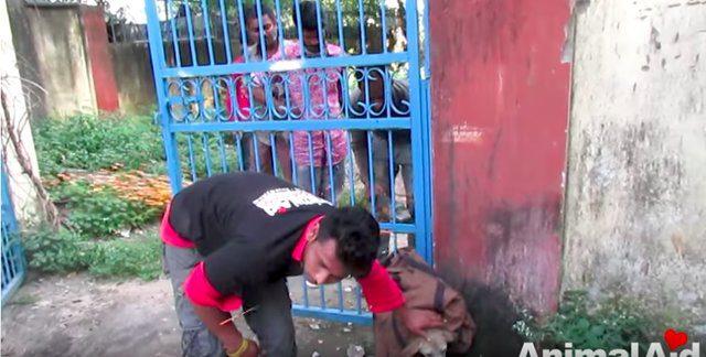 dog stuck in gate