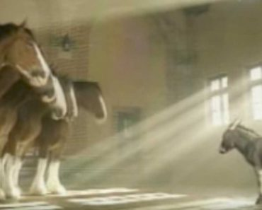 donkey clydesdale commercial