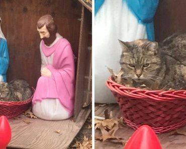 funny cat nativity scene