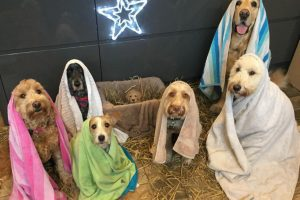 groomer dog nativity scene