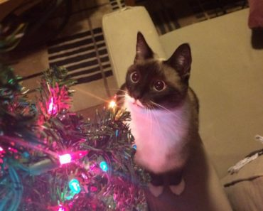 pet christmas tree safety