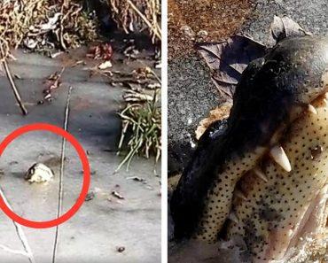 alligators survive freezing winter