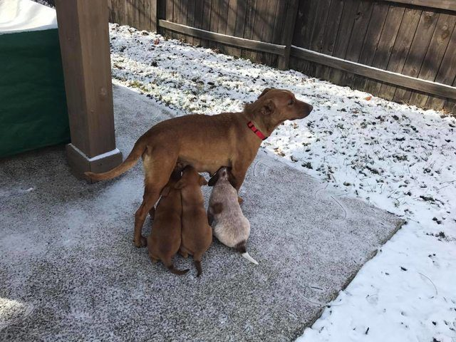 couple saves dog and puppies