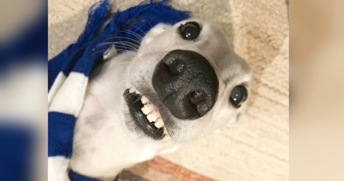 Silly Dog With Human Like Teeth Entertains His Fans On