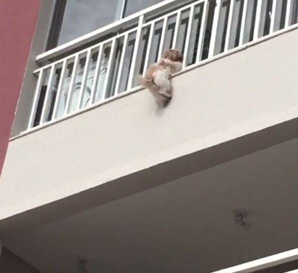 neighbors save dangling dog