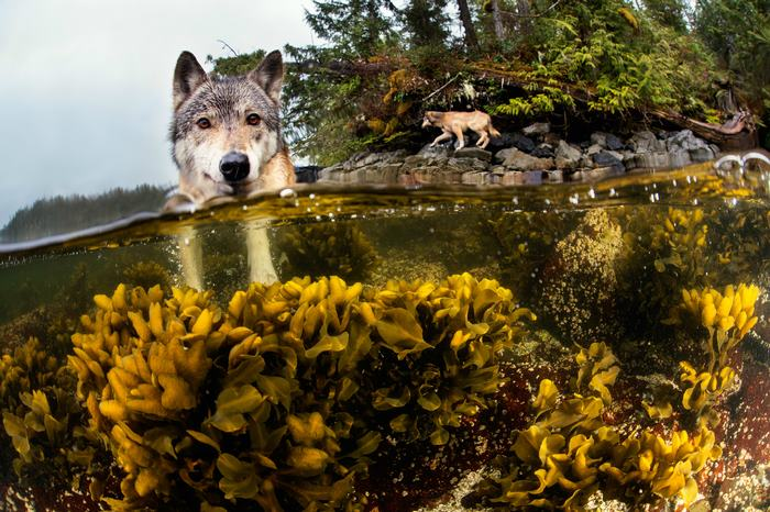 sea wolves british columbia
