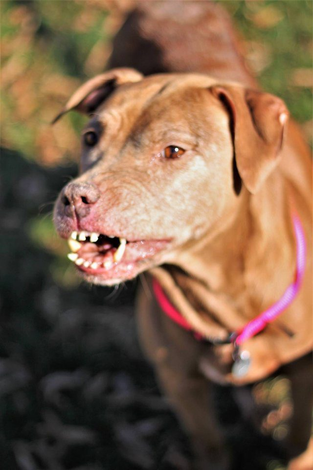 shelter dog unique smile