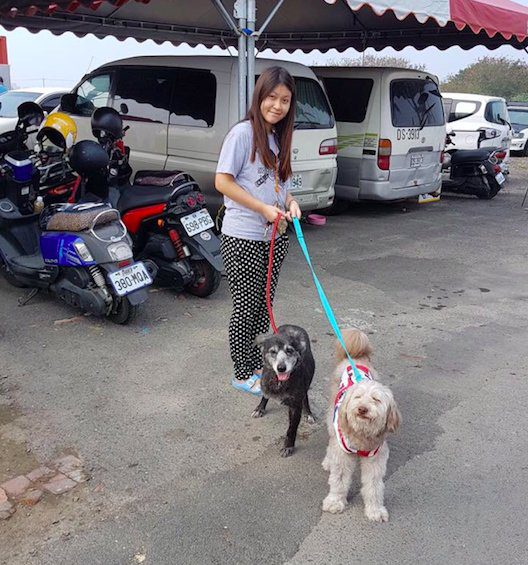 animal shelter cares thousands stray dogs