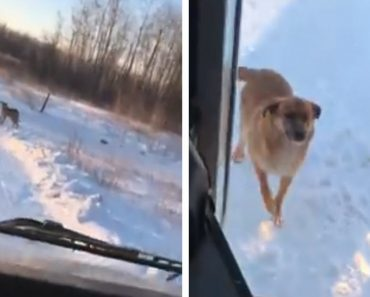 bus driver feeds stray dog