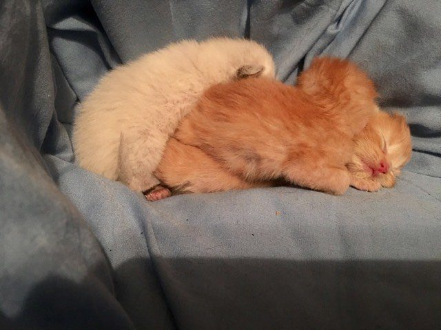 cat and kittens rescue
