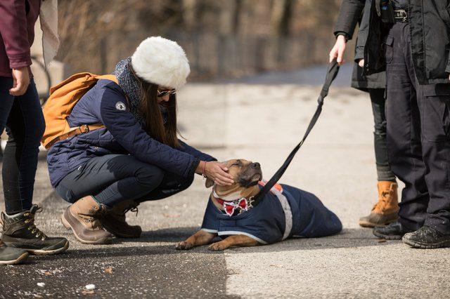 cop saves dog's life