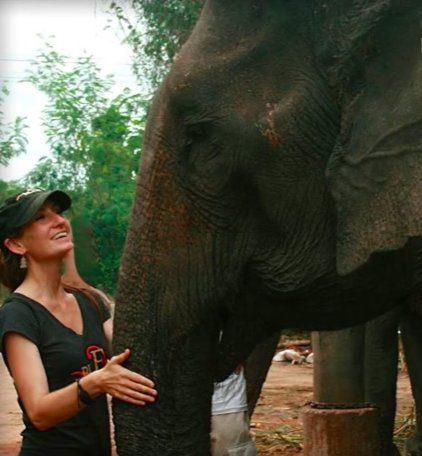 dog comforts dying elephant