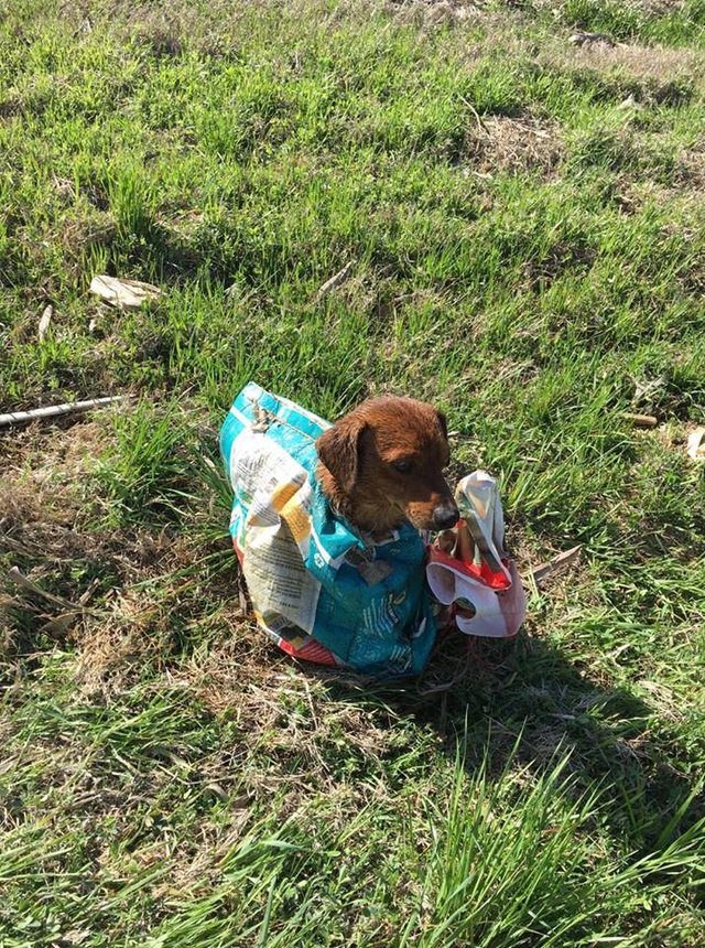 dog tied up in sack