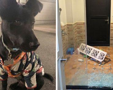 dog warns owner