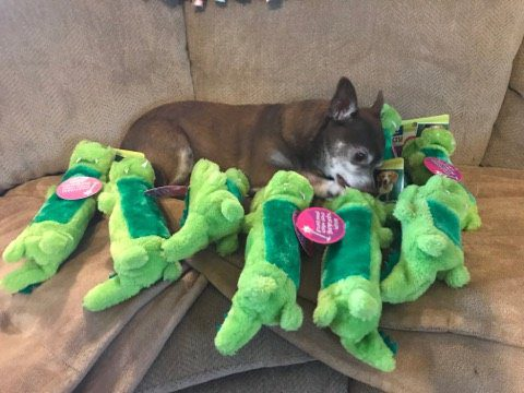 dogs surprised favorite toy