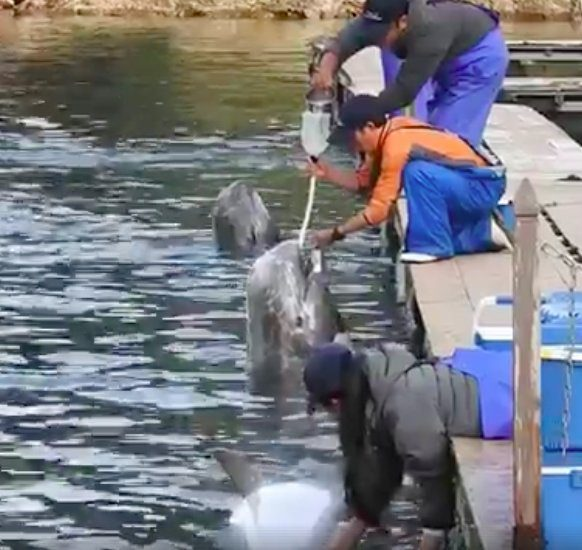 dolphin forced fed water