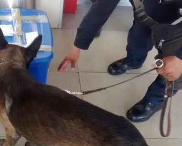 police dog finds tiger cub