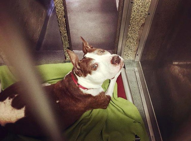 sad senior dog in shelter