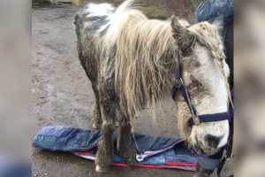 sick blind pony left on road