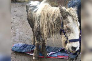 sick blind pony left on road