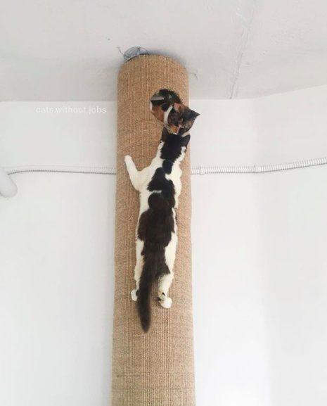 sick hairless kitten rescue