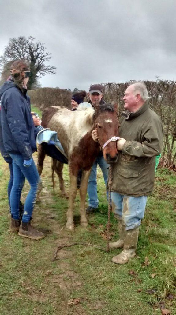 sick horse rescue