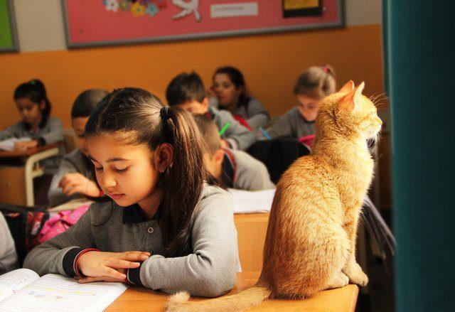 stray cat wanders in school