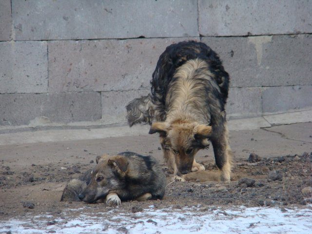 stray dog clean up before olympics