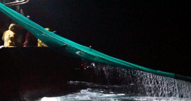 France dolphin killings