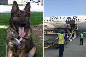 airlines mistakenly sends dog japan