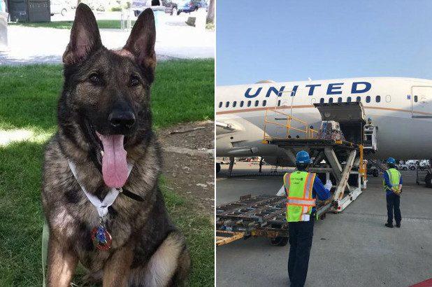 airlines mistakenly sends dog japan