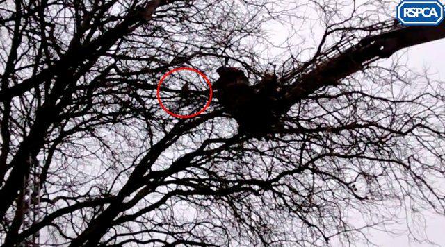 parrot stuck in tree