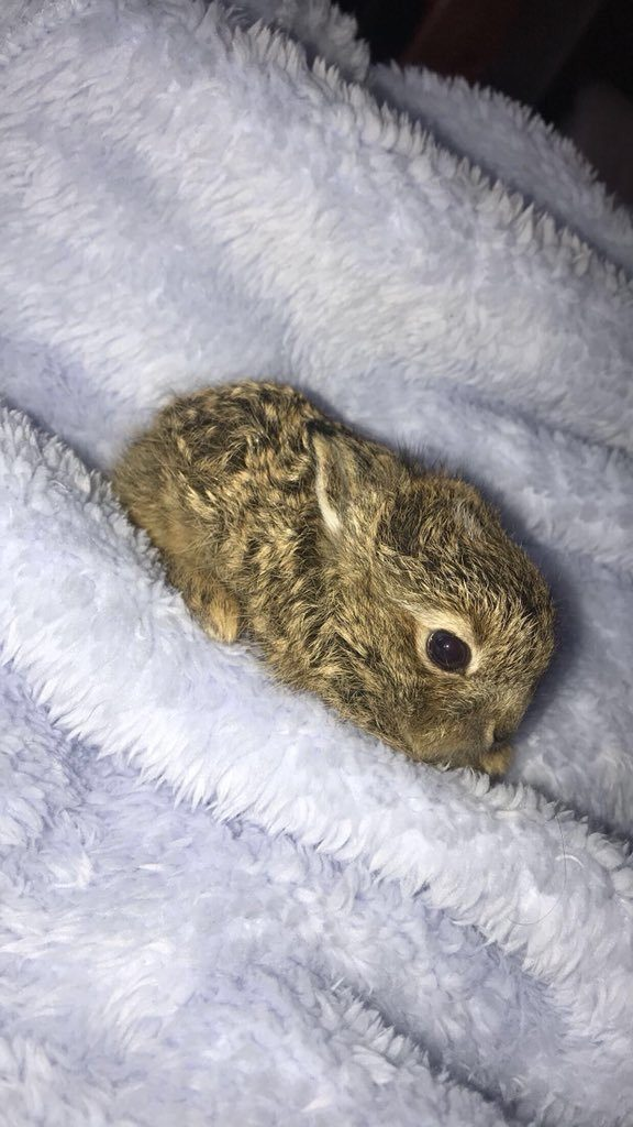 tiny hare rescue dublin airport