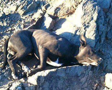 Andi Davis dog rescue