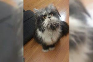 atchoum cat or dog