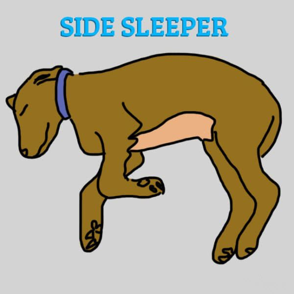different dog sleeping positions