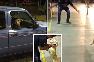 dog flips out at airport