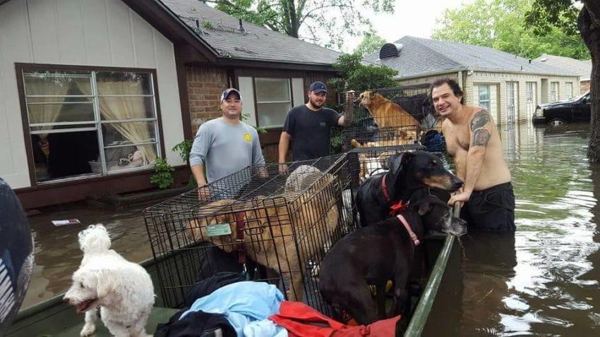dog rescuers houston