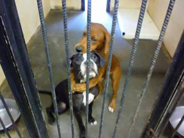 hugging dogs photo
