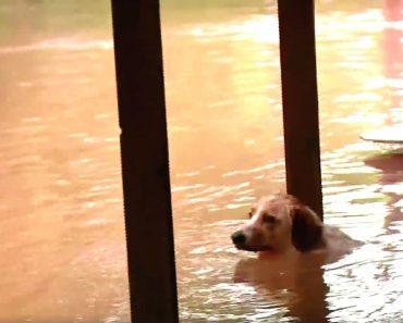 news crew dog rescue