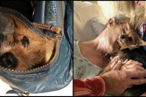 nurses help sneak dog into hospital