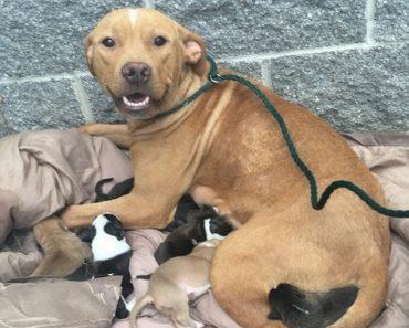 pitbull mom and newborn puppies abandoned