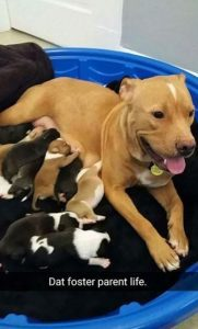 pitbull mom and newborn puppies abandoned