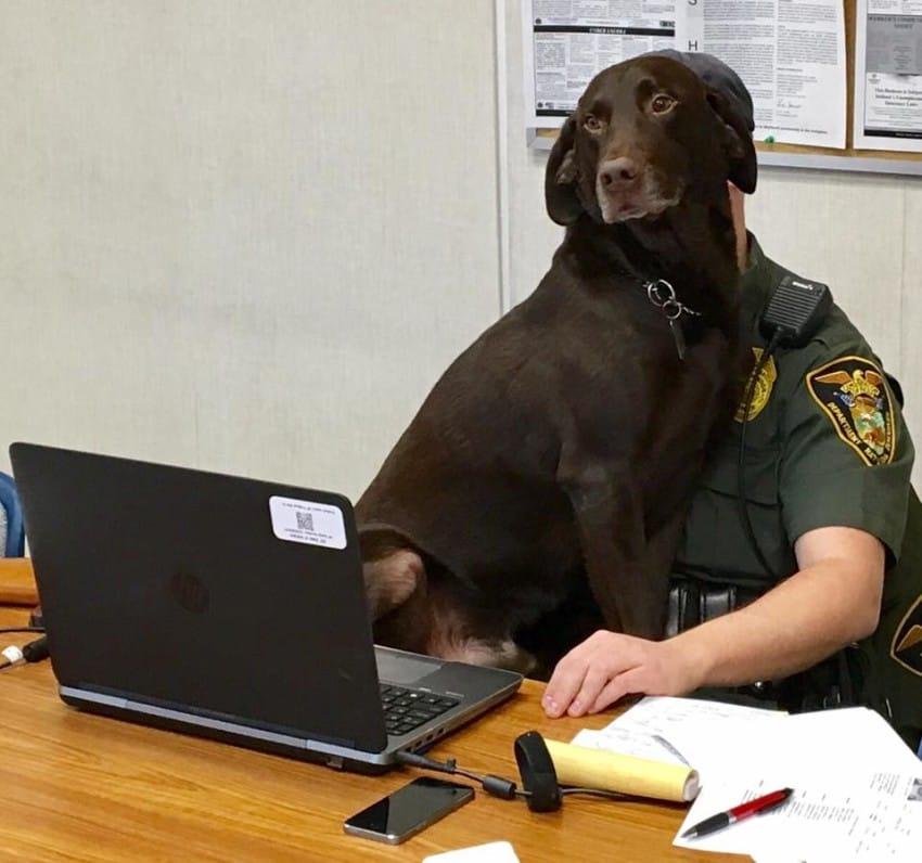 police officer knach and kenobi photos