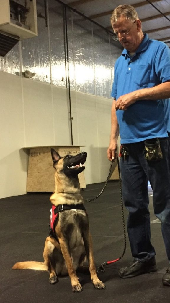 Training Dogs For Veterans With Ptsd
