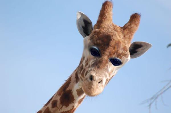 animal eyes on head